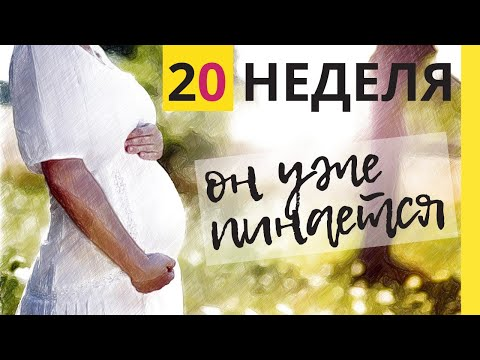Как выглядит плод на 20 неделе беременности фото
