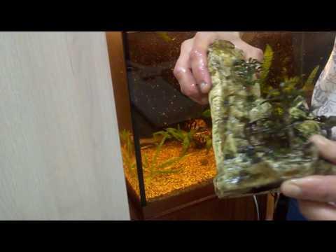 Как отмыть зелень с камней в аквариуме