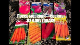 Посев МОРКОВИ  и СВЕКЛЫ на ОДНУ ГРЯДКУ. Как посеять корнеплоды!?! Секрет хорошего урожая