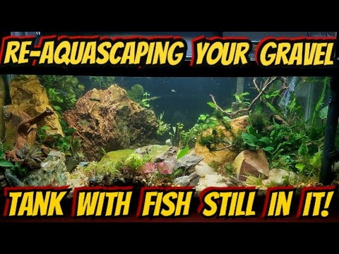 How To Re-Aquascape Your Existing Tank, With Fish In It The Whole Time! The Crucial Steps (Low Tech)