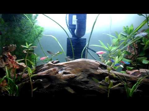Beginner's aquascape