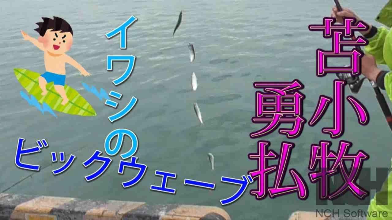 【旬の釣り】7月5日!苫小牧勇払埠頭でイワシのビックウェーブ!!