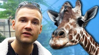 Ich gehe in den Zoo