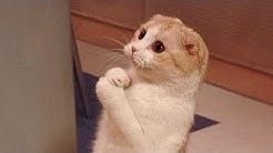 Lustige Katzen Videos 2020 - die du gesehen haben musst ! Funny Cats Fails