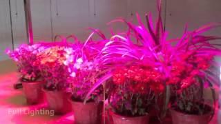 GrowSun 320W  - светодиодная лампа для растений(Купить лампу для растений GrowSun 320W вы можете на сайте Мир светодиодов ..., 2013-06-16T21:04:22.000Z)