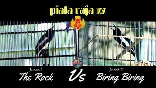 JELAS SUDAH Kacer Biring Biring Vs Kacer The Rock Jawaranya Di PIALA RAJA 2019