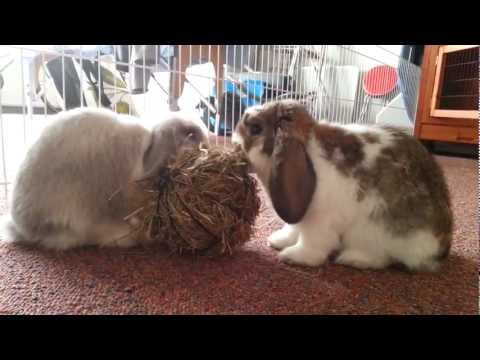 Meneer en mevrouw konijn aan de lunch