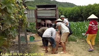 Bắt Lợn bá đạo nhất của người Việt (Getting the most heinous pigs of the Vietnamese)