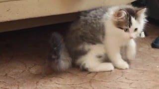 Котята в добрые руки. Бесплатно)