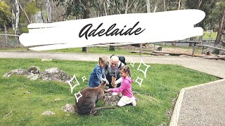 Аделаида влог. День 3 Пенис коалы #путешествуемпоАвстралии #отдыхсдетьми