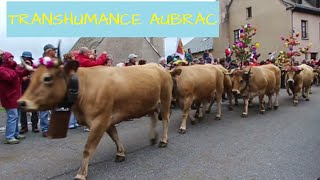 ► Transhumance en Aubrac 2016