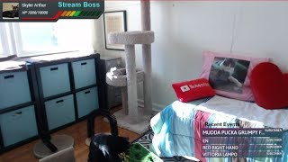 Lucky Ferals LIVE Cat Cam 🔴 Boo's Room - Cat Relax And Chat