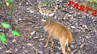 Liz's Big Bama Buck (Update)