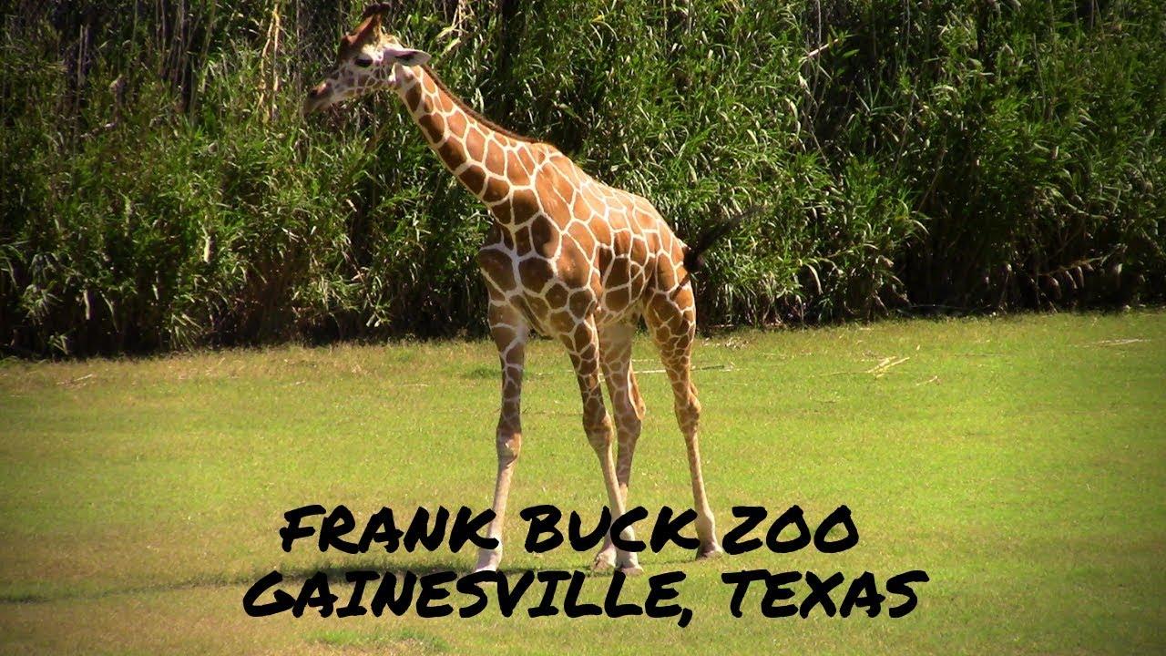 Frank Buck Zoo - Gainesville, Texas