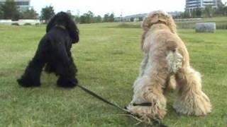 ジャスミンとローズ。2歳と2カ月。 お散歩に誘うのがつい楽しくて何度も...