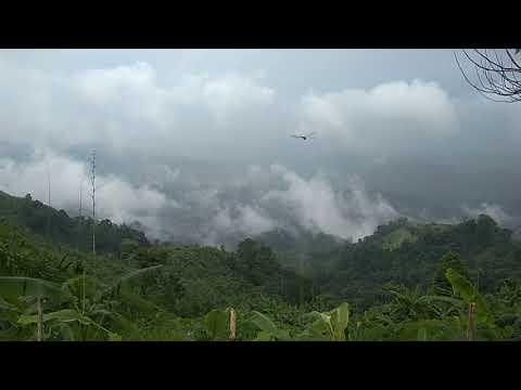 Way to The Nilgiri (Blue Mountains)