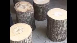 istiridye mantarı kavak ağacında nasıl yetiştirilir BAŞTAN SONA ANLATIM LÜTFEN ABONE OLUN