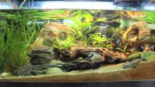 30 Gallon Aquarium Ii Update June 2013