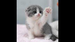 Funny baby animals on cute pets