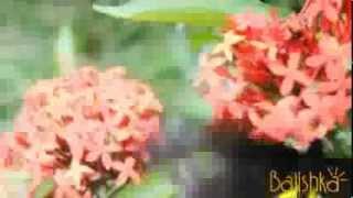 Парк бабочек на Бали(Балишка.ру представляет! Красивейшее, невероятное видео из Парка Бабочек, одного из чудеснейших парков..., 2013-08-01T20:10:27.000Z)