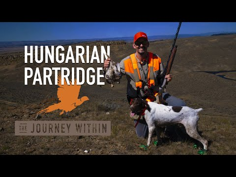 Hungarian Partridge, Wyoming - Day 3: The Journey Within - A Bird Hunter's Diary | Mark V Peterson