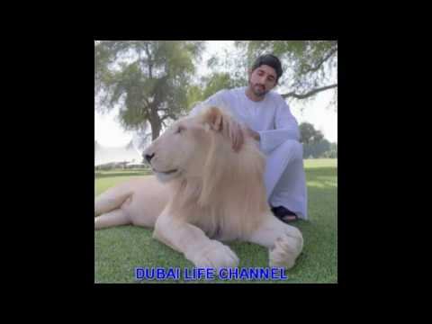 FAZZA with pets.Lion.Horse.Camel.Falcon.Elephant |||| Dubai Life