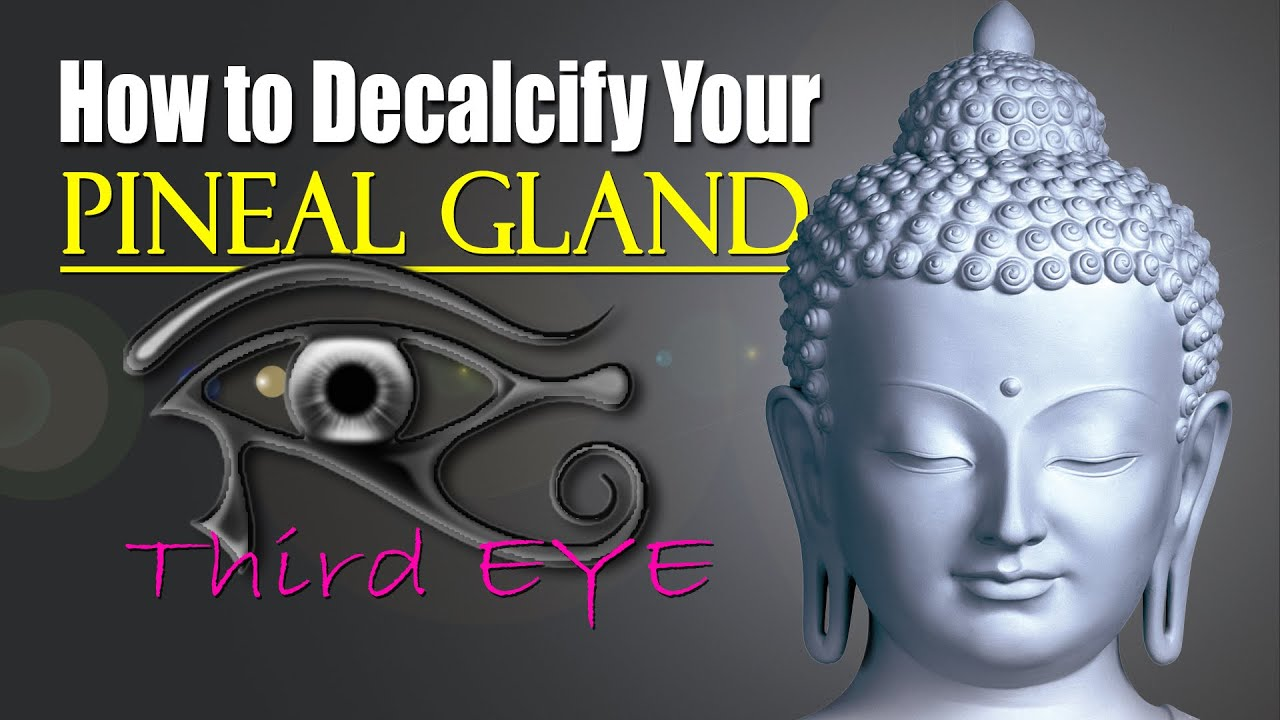 How To Decalcify Your Pituitary Gland Pineal Gland Our 3rd Eye