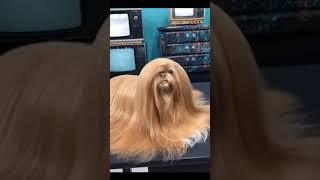 엘라스틴 했어요(beautiful hair) #shor…