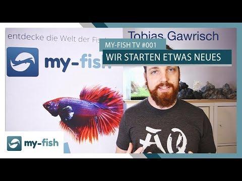 Wir starten ein neues Format! | my-fish TV
