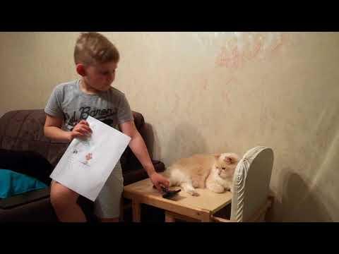 Филин и кот
