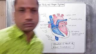 11. Human Body and Human Organs. Part 2. 8th Science. Maharashtra Board. By SGT Classes