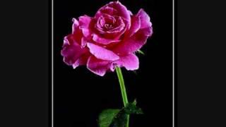 koes Plus - Mawar Bunga