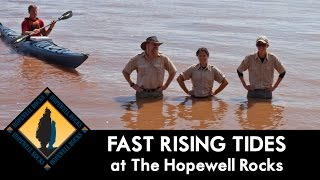 Fast Rising Tide at The Hopewell Rocks