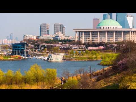 Seoul Blossom