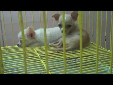 Cartimar Pet Market, Manila 30 August 2009