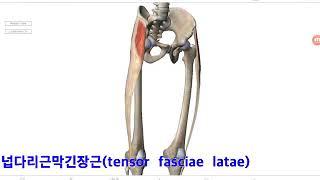 기능해부학 8-3 무릎관절-각각의 근육 by learning mate