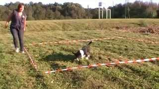 Cardigan Welsh Corgi Meryl @ Training Cavage (6 Truffes) 12.09.2014
