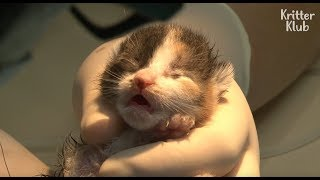 Since Birth, Poor Kittens Were Adjoined All Together Like Siamese twins | Kritter Klub