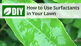 How to Use Surfactants in Your Lawn