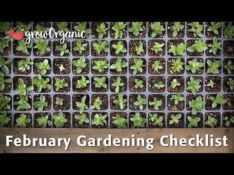 February Gardening Checklist – 10 Tips To Help Get Your Organic Garden Ready For Spring