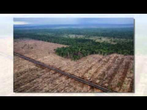 Indonesia: Deforestation