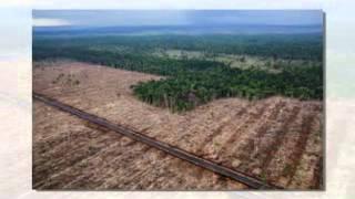 Indonesia: Deforestation