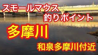 多摩川  和泉多摩川  バス釣りポイント  スモールマウスバス  ブラックバス thumbnail