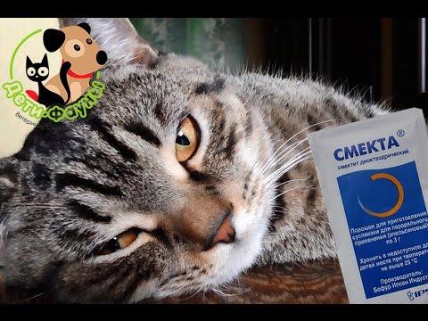 Смекта. Можно ли смекту собаке/кошке? Как разводить смекту?