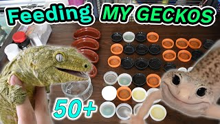 Feeding All of My Geckos (50+)! - Leachies, Cresteds, Gargoyles, etc!