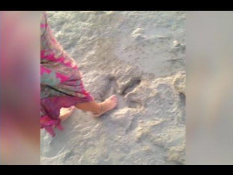 Следы гигантского динозавра нашли на австралийском пляже