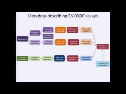 Overview of the ENCODE Data Portal - Eurie Hong