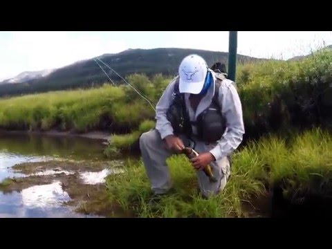 Yellowstone fly fishing for wild cutties