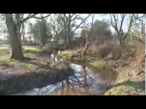 Restoring New Forest streams
