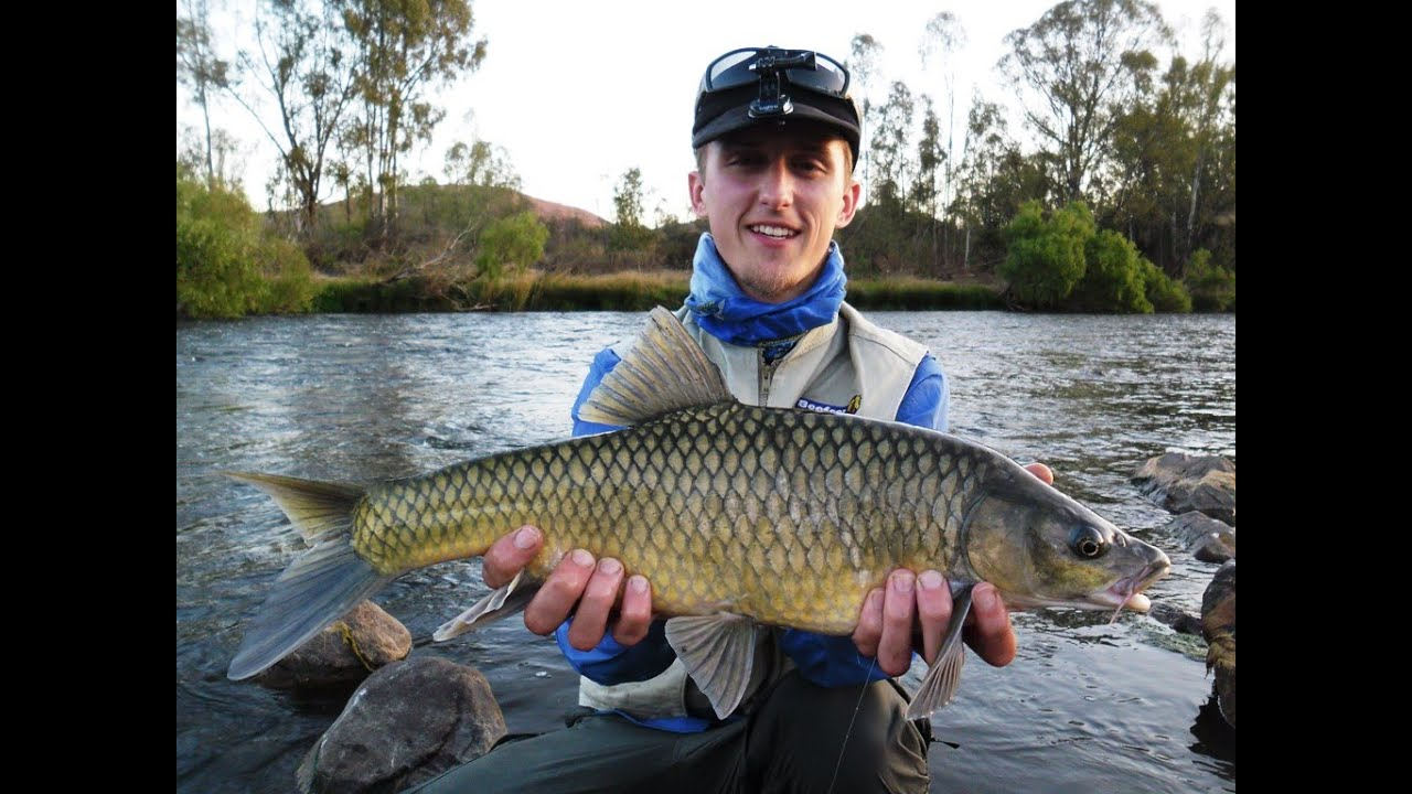Vaal River Smallmouth Yellowfish Mudfish Barbel Catfish And Carp 6 Kg On Fly Re Upload Youtube